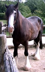 Appealing horse picture