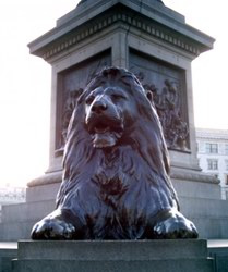 One of the lions at the base of Nelson's Column