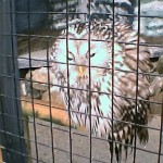 Owl Sanctuary day – we always visit there when in Cornwall